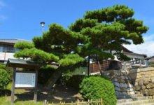 日本留学如何在一年内合格早稻田大学、大阪大学(前辈干货分享)-留学世界网
