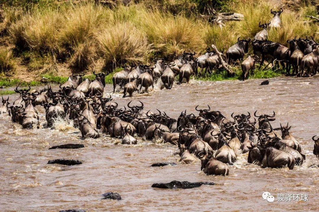 肯尼亚 神秘的非洲国度,除了看动物迁徙你还能怎么玩?
