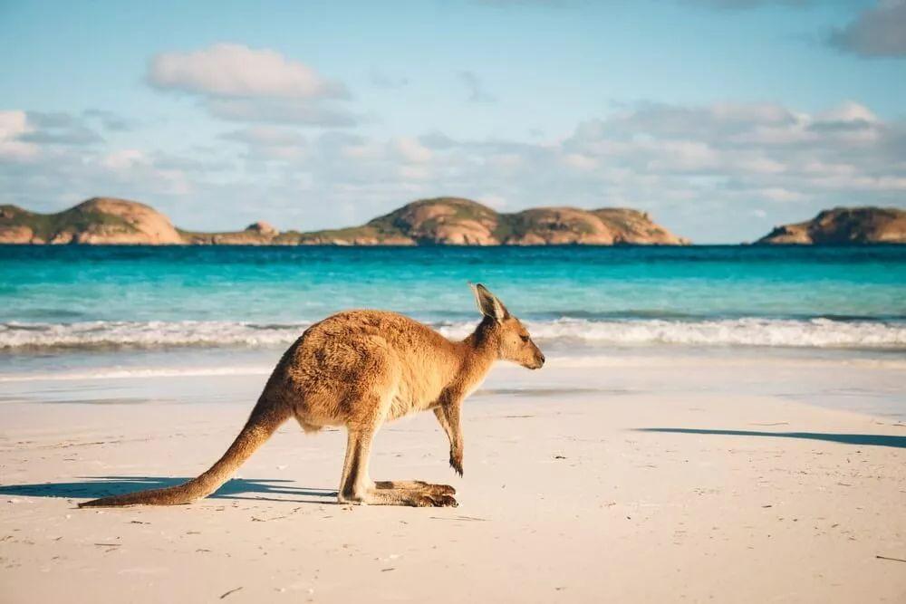 留学你会选哪个国家?英、美、澳3国留学利弊分析