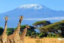 肯尼亚|神秘的非洲国度,除了看肯尼亚动物大迁徙你还能怎么玩?-留学世界网