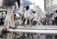 """日本最新打卡地!把""""猪圈""""搬到了市中心?游客们不嫌臭还挤破头...-留学世界网"""