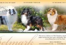 美国留学领养宠物攻略经验指南-留学世界网