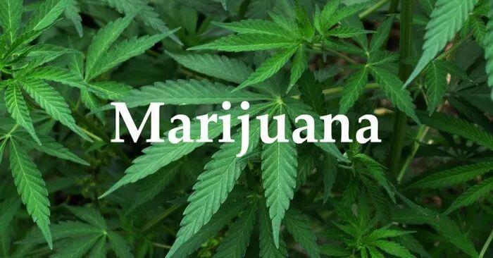 美国大学生去年大麻吸食率达43%,为35年来最高!
