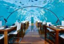 马尔代夫酒店康莱德的水下客房,玻璃用18厘米厚,住一晚要 15 万-留学世界网
