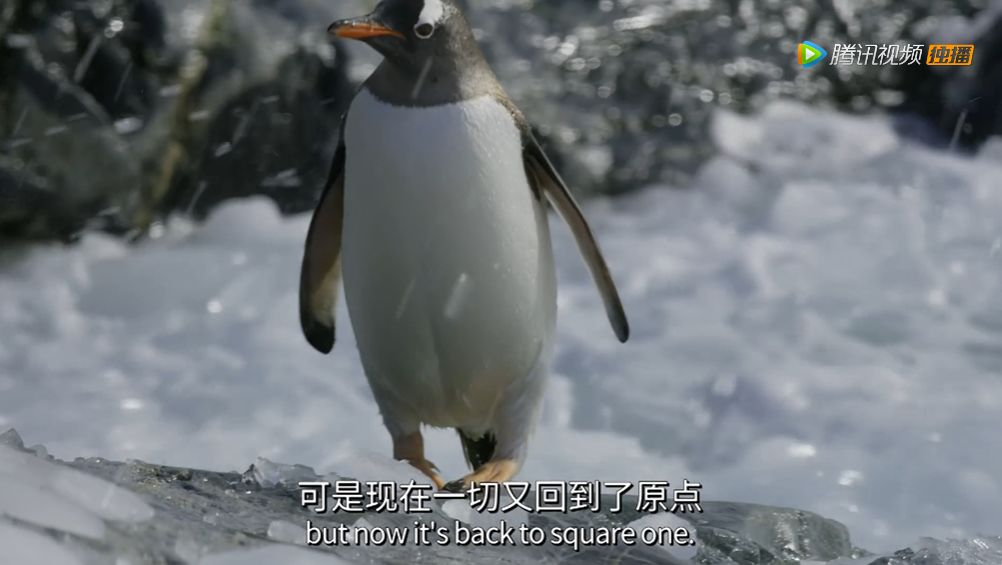 仅一集就斩获9.9高分,这可能是今年最值得看的自然教育纪录片