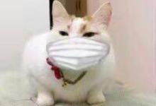 #武汉肺炎 #新型冠状病毒 憋坏了吧?老司机给你一份宅着而憋不坏的室内指南-留学世界网
