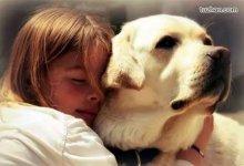 网友预防 #武汉肺炎 偏方:养宠物可以预防呼吸疾病-留学世界网