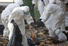 新疆湖南连发5起禽流感,动物疫情形势仍严峻 #武汉肺炎 #新型冠状病毒-留学世界网
