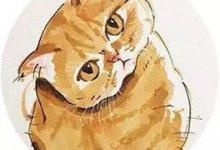 """""""趁我被隔离检查  #武汉肺炎 #新型冠状病毒 ,社区把我的猫XXX了!""""-留学世界网"""