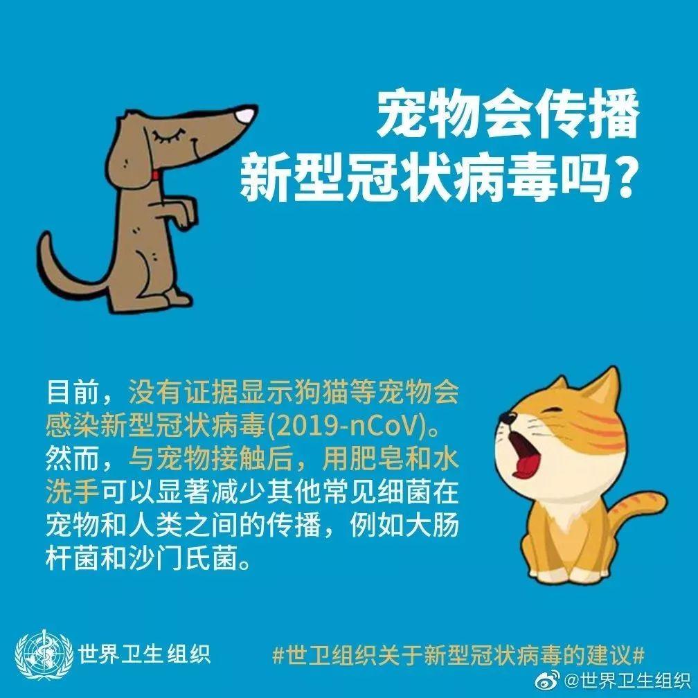 武汉封城后的宠物营救计划:人类犯错的后果,不该由它们承担