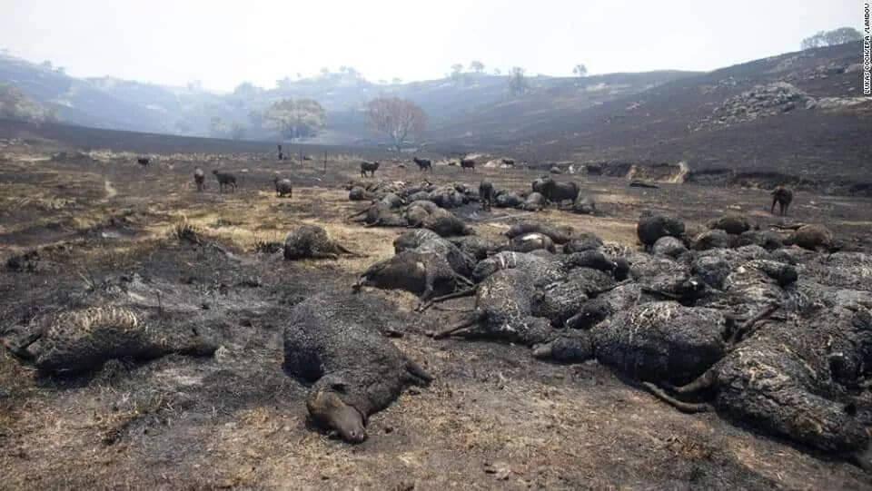 大熊猫散步、野猪狂奔、雪豹金雕现身…人类消失1个月,动物集体狂欢!