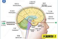 北京地坛医院确诊新冠合并脑炎患者,首次证实 #武汉肺炎 #新型冠状病毒 #武汉疫情 #COVID19 病毒感染中枢神经系统,学术分析这一病例的特殊之处-留学世界网