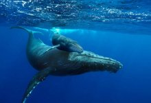 中国南海首次发现鲸落:一鲸落,万物生!这是世界上最浪漫的死亡···-留学世界网