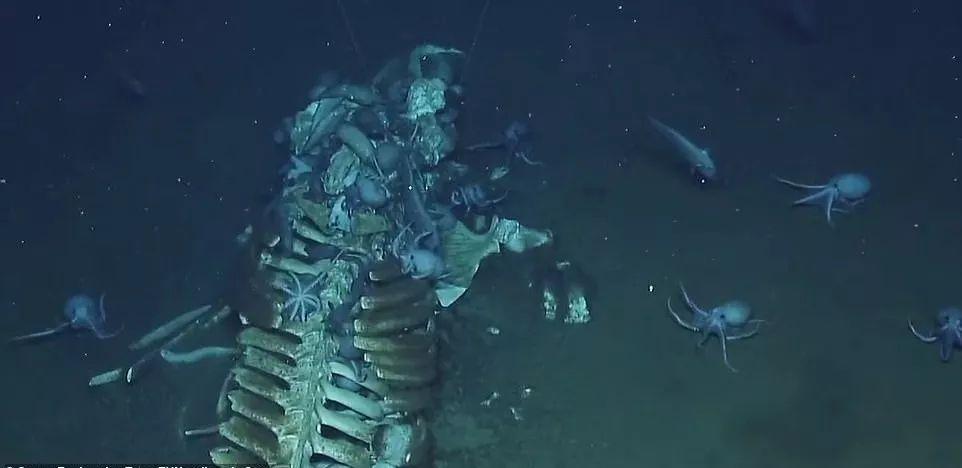 中国南海首次发现鲸落:一鲸落,万物生!这是世界上最浪漫的死亡···