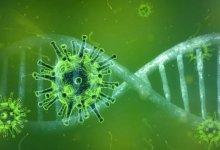 意大利科学界终于证实!新冠状病毒正在失去毒性,新感染者更趋向于无症状 COVID-19 #武汉肺炎 #新型冠状病毒 #COVID19 #COVID_19 #CoronaVirusUpdates #COVIDー19 #COVID__19-留学世界网