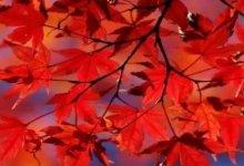 加拿大渐入全年最美模式!送上最全赏枫攻略,错过等下年!-留学世界网